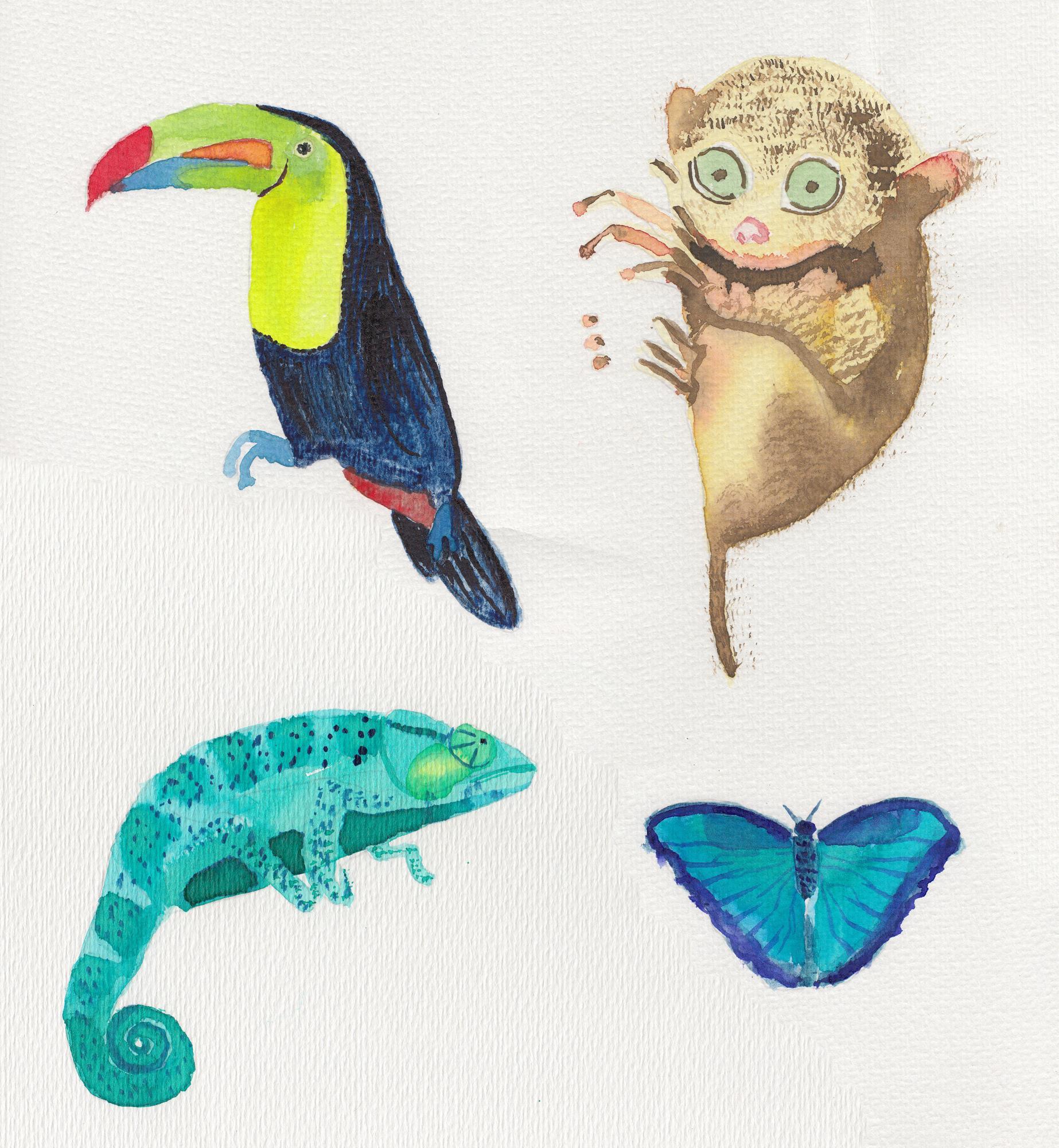 acuarela-camaleon-lemur-tucan-tropical (2)